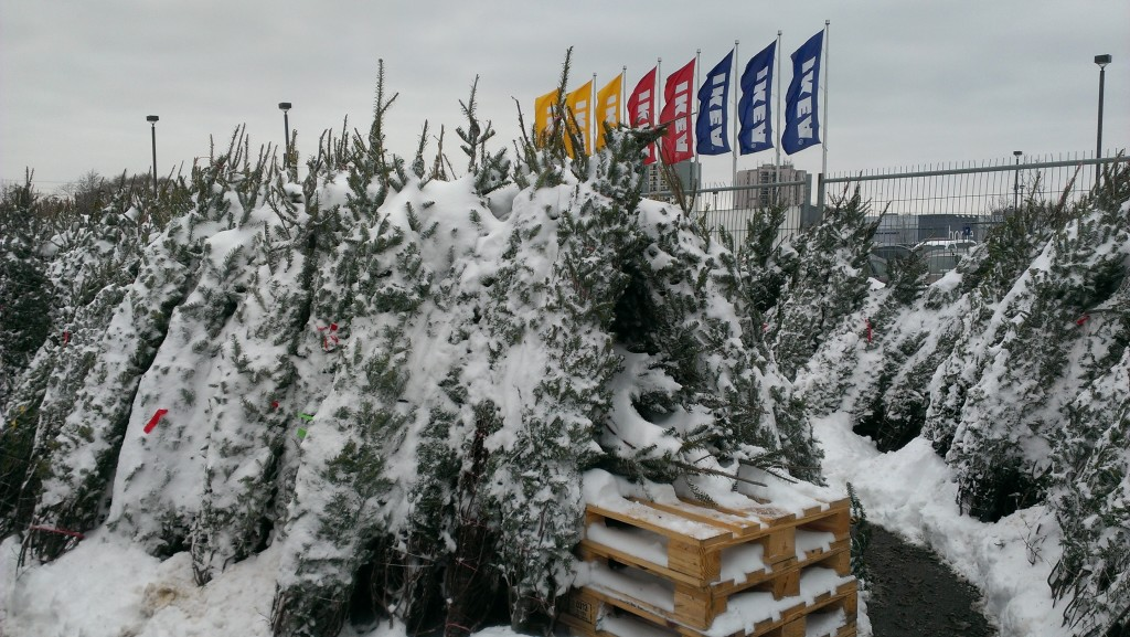 IKEA Tree Lot in support of Big Brothers and Big Sisters.